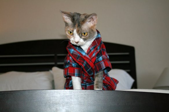 the cat in the robe